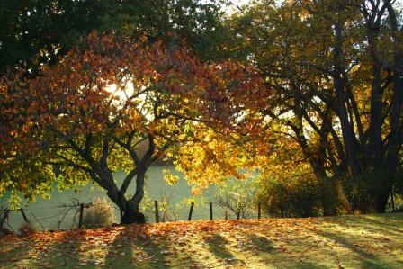 Autumn colours at there best