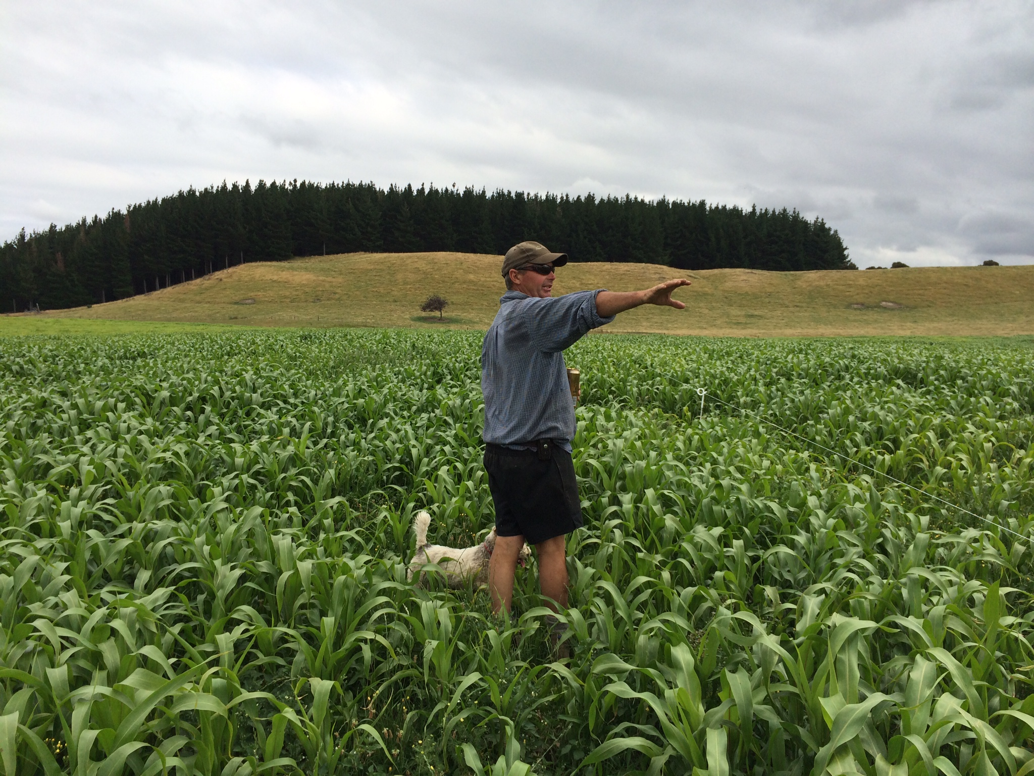 Gary checking out his sorgum crop