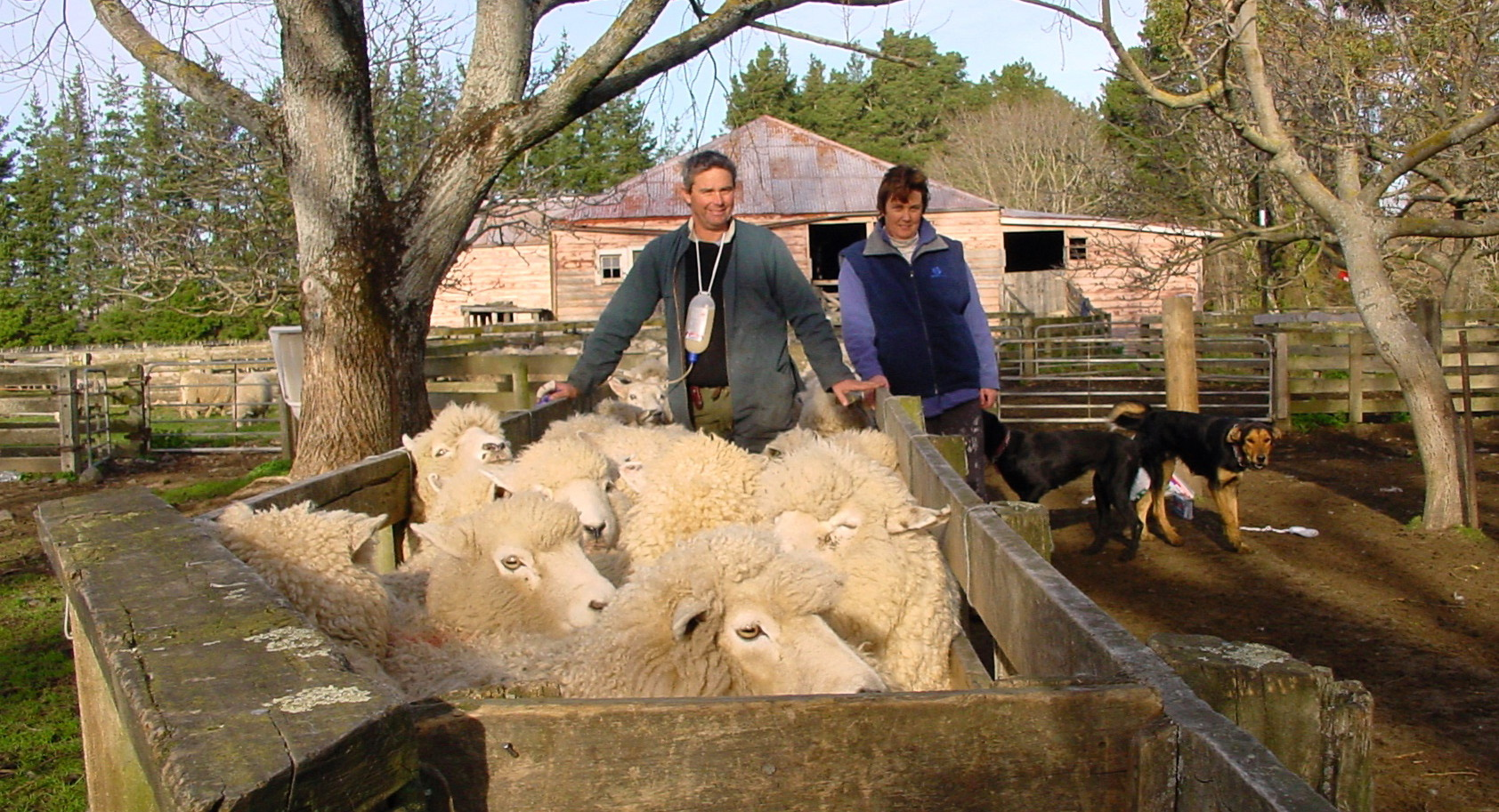Gary and Kirsty working in sheep yards