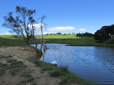 Duck Dam