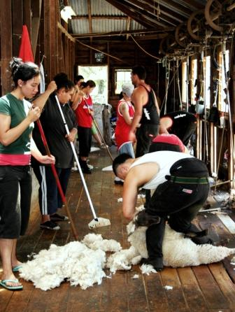 The shearing shed